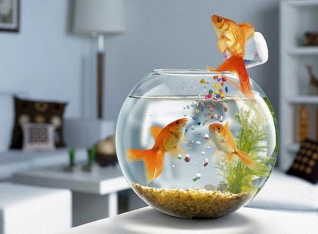 Đặt bể cá trong phòng làm việc