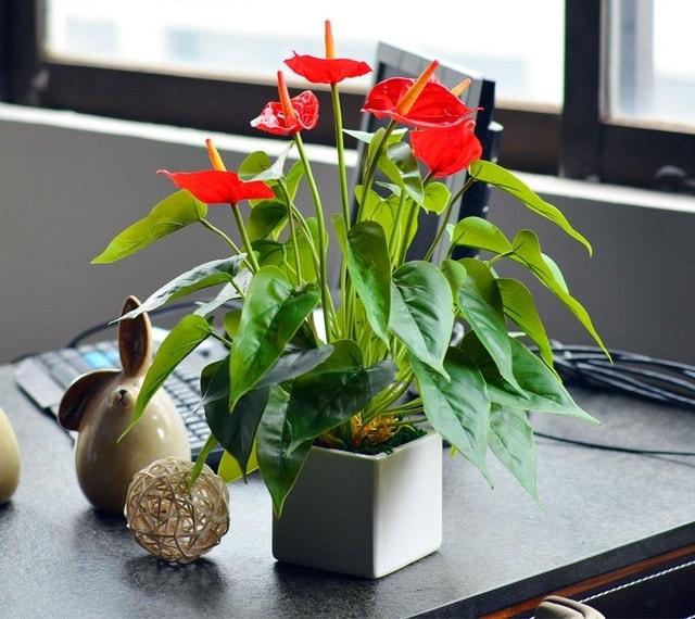 Trồng hoa tươi trong văn phòng